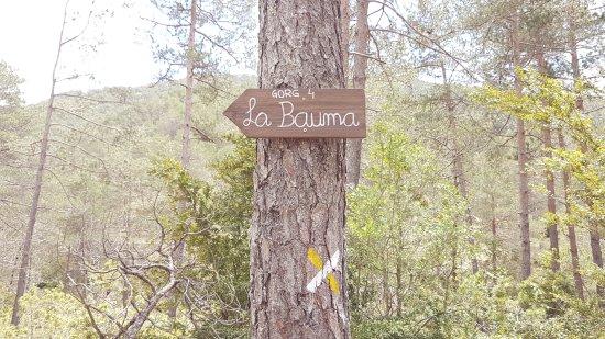 Campdevànol, España: Ruta del 7 Gorgs