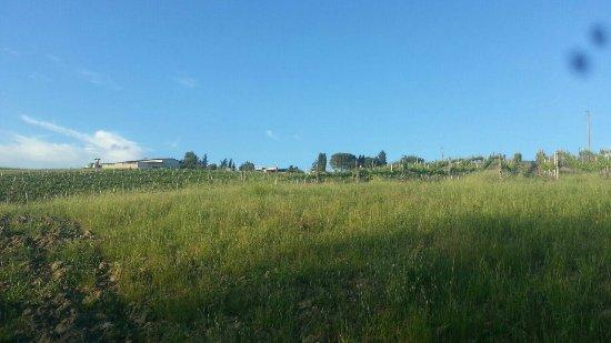 Montespertoli, Italie : Vacanza stupenda... Tutto perfetto