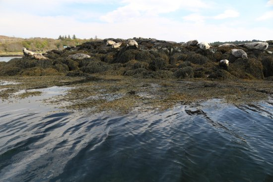 Seals from Dunvegan Castle Boat Trip