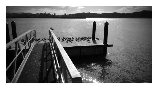 Bay of Islands, Nya Zeeland: Oyster catchers on the jetty at Horeke