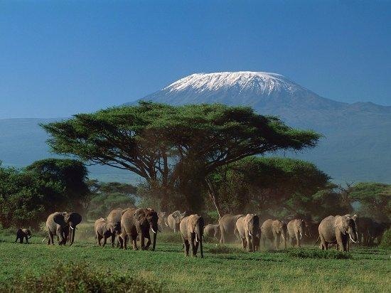 Amboseli National Park, Kenya : I captured this breath taking moment at the Amboseli N/P .Kilimanjaro Mountain forms the backgro
