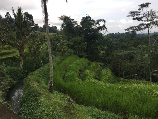 Bali Walking Hiking Adventure - Day Tours