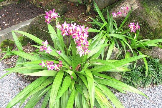 Seychelles National Botanical Gardens: National Botanical Gardens