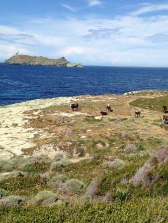 U Pozzu: Promenades sur le sentier des douaniers du Cap-Corse. Paysages et Flore diverse vue sur l'île de