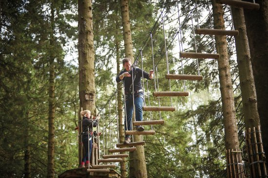Ringwood, UK: Go Ape Tree Top Adventure at Moors Valley