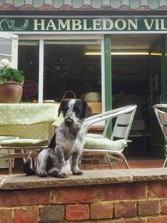 Hambledon, UK: Dog friendly