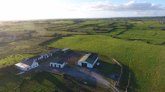 Miltown Malbay, Ιρλανδία: Hestakot - Icelandic Horse Farm