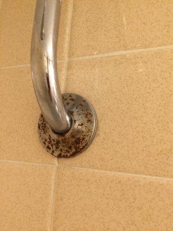 Hamburg, Estado de Nueva York: This shower head has not see a scrub brush in years