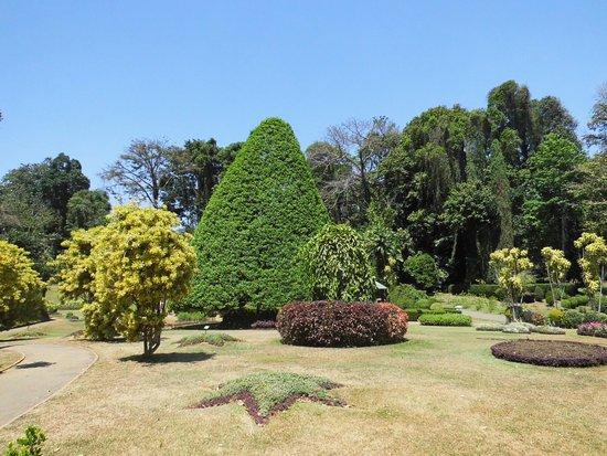 Plantes et arbustes du parc bild von royal botanical for Plantes et arbustes