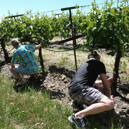 Kenwood, Californië: Hands on training