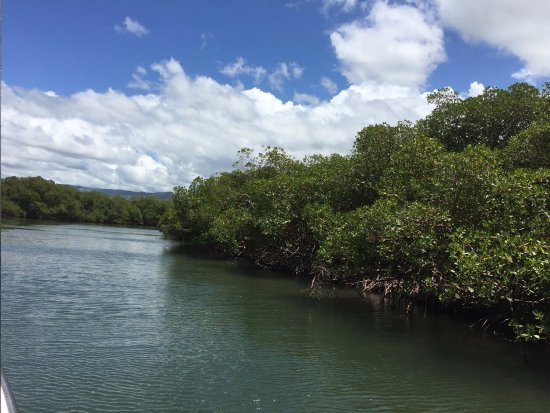 Punta Rucia, Repubblica Dominicana: The Mangroves