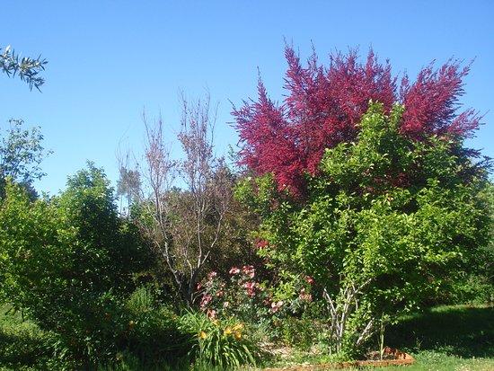 Pedrogao Grande, Portugalia: várias árvores e flores