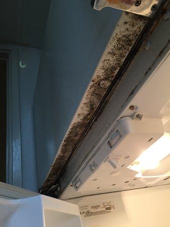 Dayton House Resort: Mold on fridge