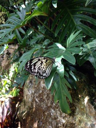 Butterfly Rainforest: photo4.jpg