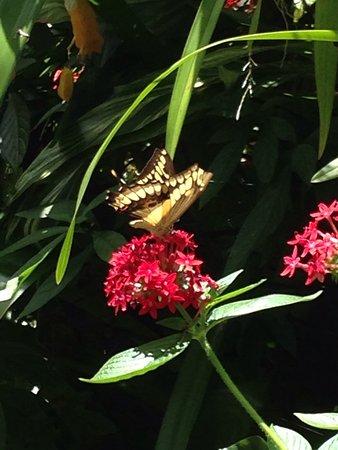Butterfly Rainforest: photo6.jpg