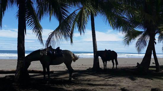 Esterillos Este, Costa Rica: Mambo and Cinderella :)