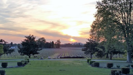 From the dining room looking over the vineyard as the sun began to set.