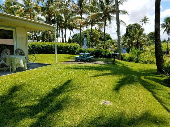 Arnott's Lodge: Back yard view...nice lawn with picnic area