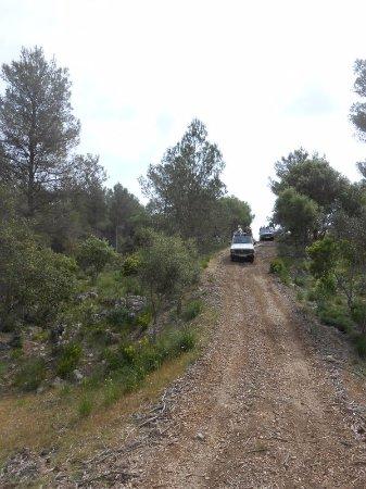Jeep Safari Menorca: sur les chemins, dans la foret