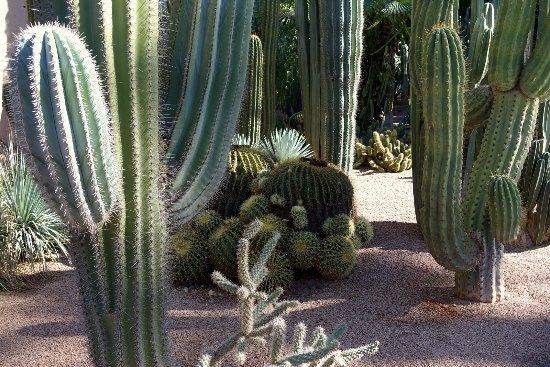 Variedades de cactus no jardim majorelle em marrakech for Cactus variedades
