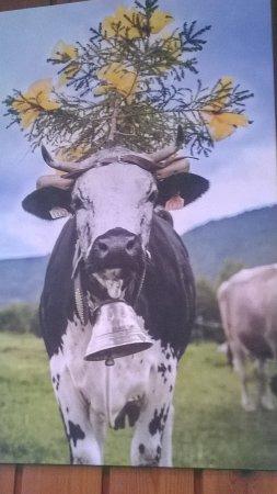 Metzeral, France: La transhumance, qui a lieu au printemps et en automne; les vaches sont décorées de sapin et de