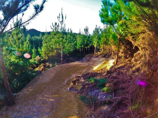 Waitangi Mountain Bike Park