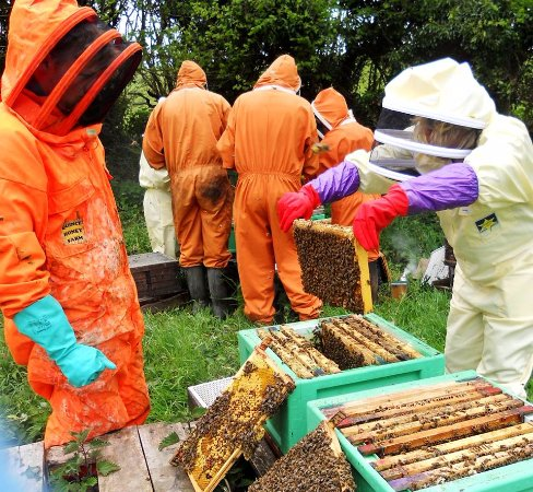 South Molton, UK: finding the queen bee