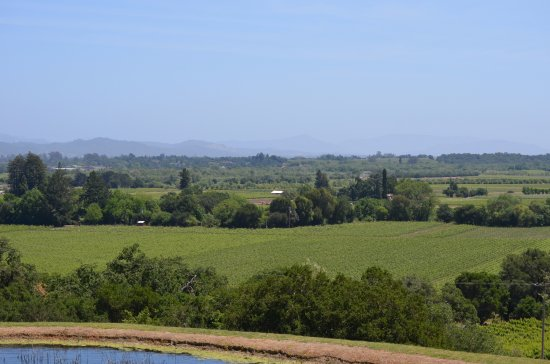 Healdsburg, CA: The view