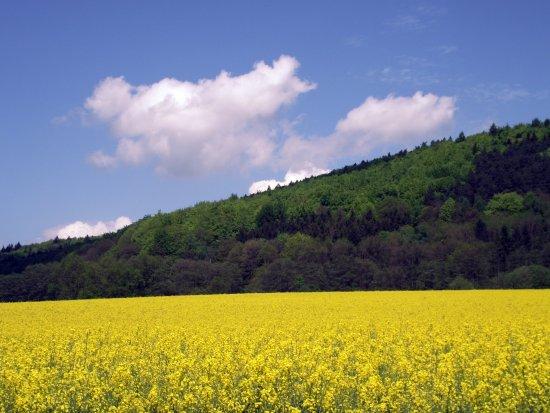 Hannoversch Münden, Tyskland: Landschaft