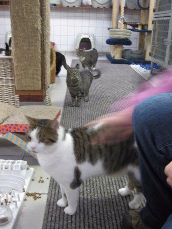De Poezenboot: Me petting a cat at De Pozenboot