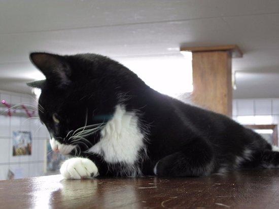 A resident cat at De Poezenboot.