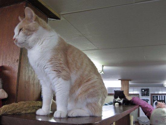 A cat at De Poezenboot