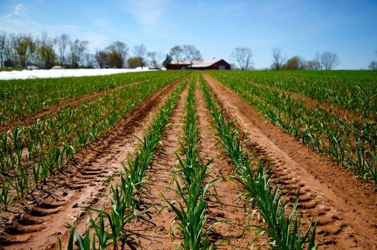 Readington, Нью-Джерси: fields and fields of crops