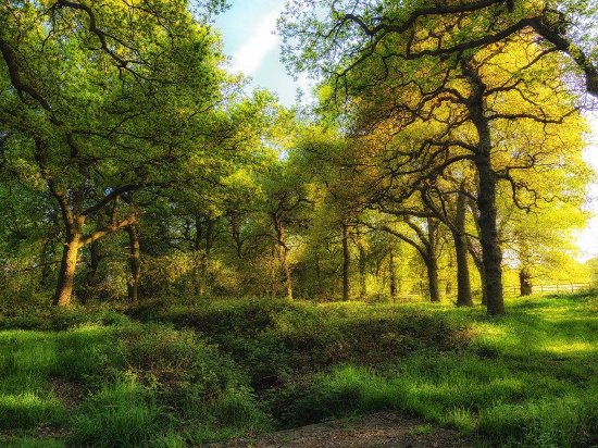 Alvecote Wood