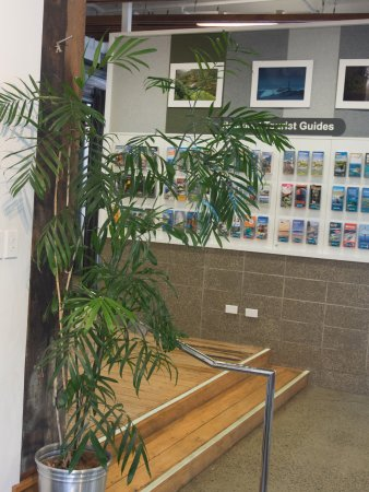 Whanganui, New Zealand: i-SITE's potted bamboo palm. They're native to the Mayan world.