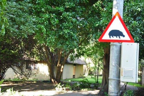 Namushasha River Lodge: Beware the hippos at night. A reason to come here.