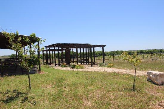 Rogers, TX: Walker Honey Farm - Vineyard & patio
