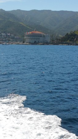 2017031895120908 picture of afishinados for Catalina island fishing charters