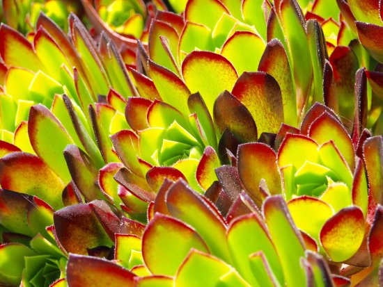 San Francisco Botanical Garden : photo2.jpg