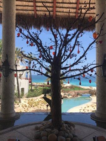 拉斯文塔納斯阿爾帕里亞索紫檀度假村張圖片
