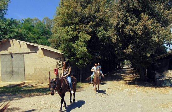 Circolo Ippico Amico Cavallo