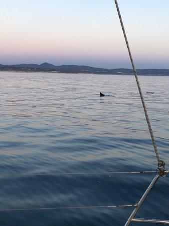 เฮอร์มานัส, แอฟริกาใต้: Sunset cruise 15th may, beautiful views