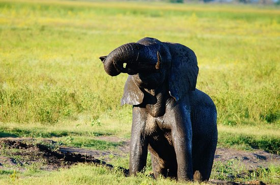 Hwange, Zimbabwe: The taken when we were at Khulu ivory the best in the world when it comes to safari lodges