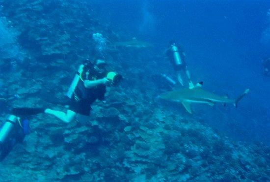 Moorea, French Polynesia: GOPR0523_large.jpg