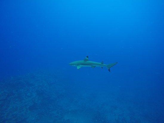 Moorea, French Polynesia: GOPR0521_large.jpg