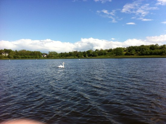 Fermanagh Lodges: Swans on the lake