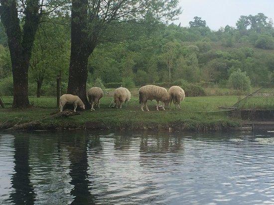 Caneva, Italy: le pecorelle