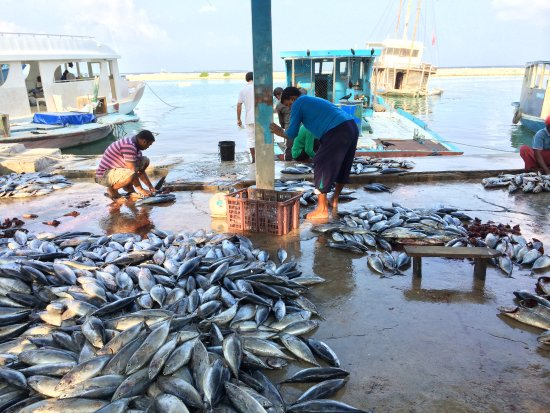 Veli Retreat: Attraction: Fishmarket