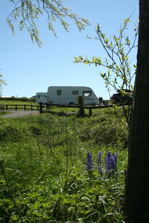 Ballyness Caravan Park: Bluebell Wood