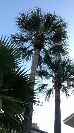 ทิโบโด, หลุยเซียน่า: Outside by the pool!